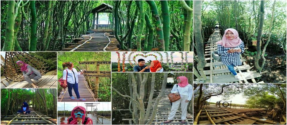 mangrove-jembatan-api-api